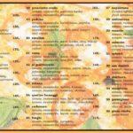 Pizzeria Padrino Jindrichuv Hradec Menu 1